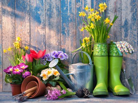 Various Type of Garden Sheds Online